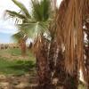 Image for Contrada Perrone